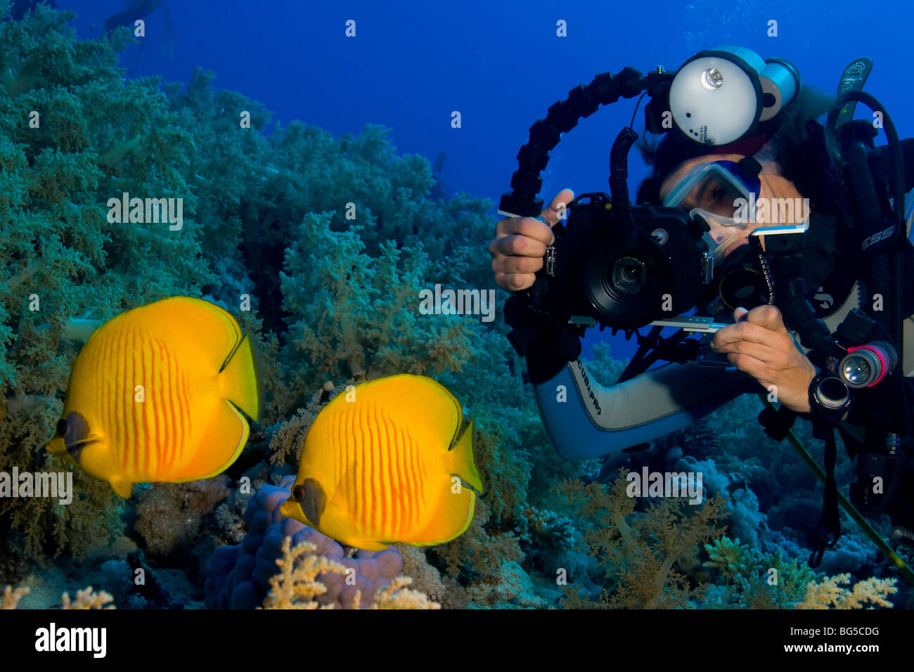 Underwater photographer scuba diving, Ras Mohammed, national park, Egypt, diver, tropical reef, fish, colorful, - Stock Image