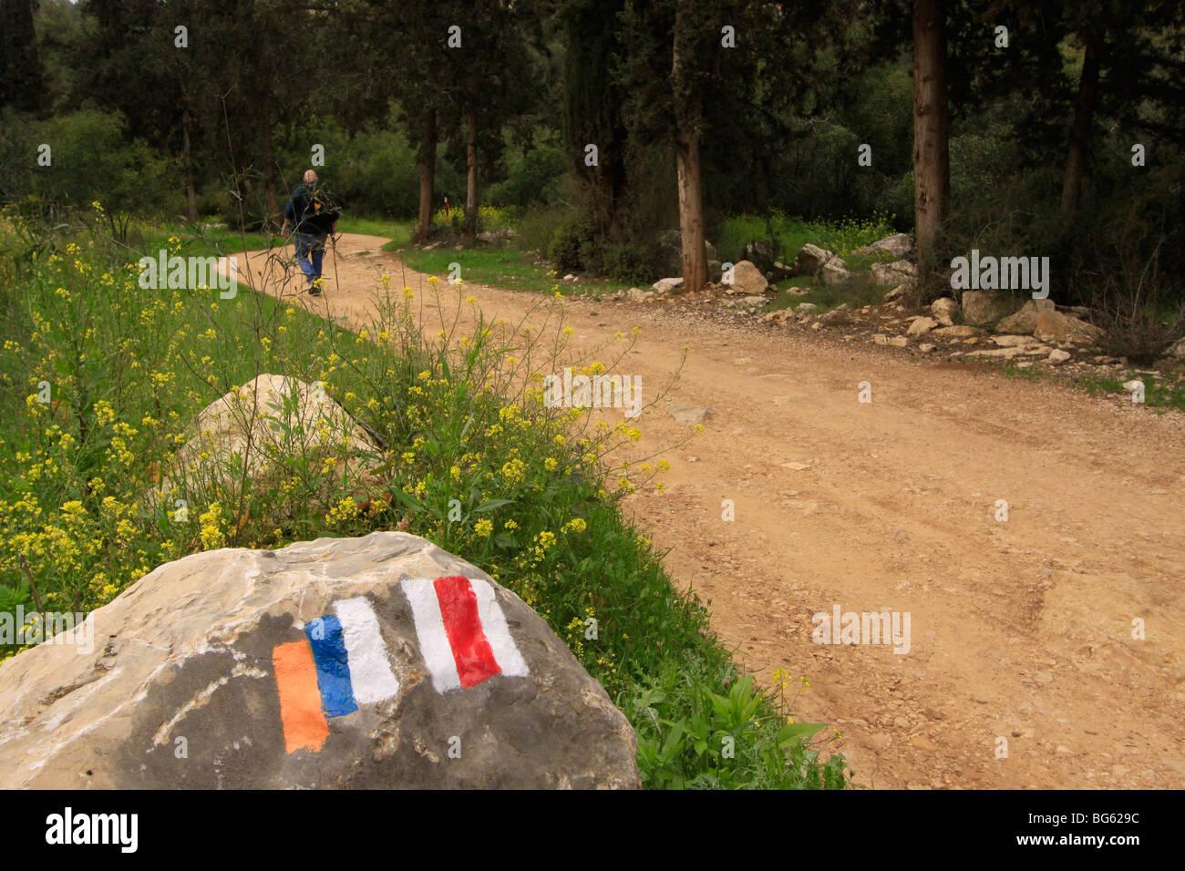 Israel, Jerusalem Mountains, Israel Trail in Nahal Ksalon - Stock Image