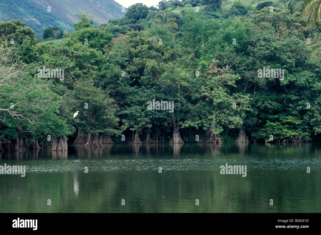 charco-verde-mangrove-lagoon-in-the-the-