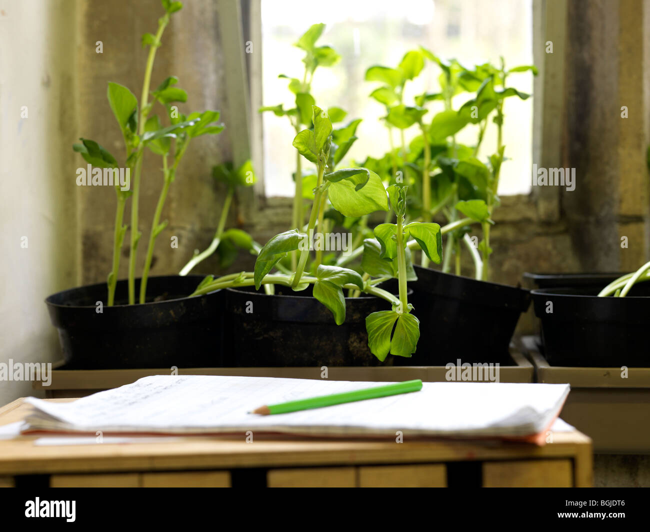plants growing in classroom window - Stock Image