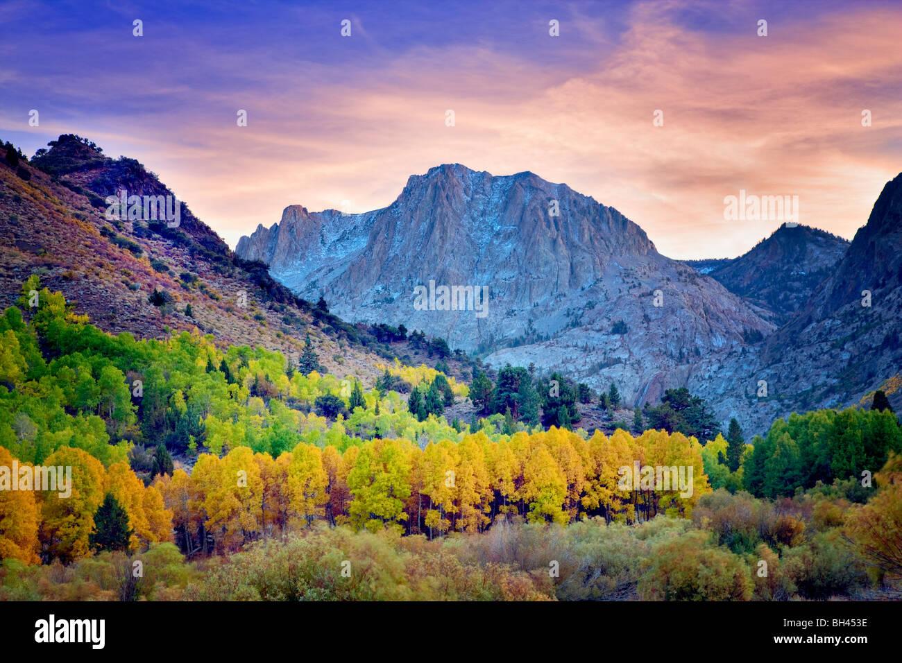 Carson Peak and fall colored aspens. California - Stock Image