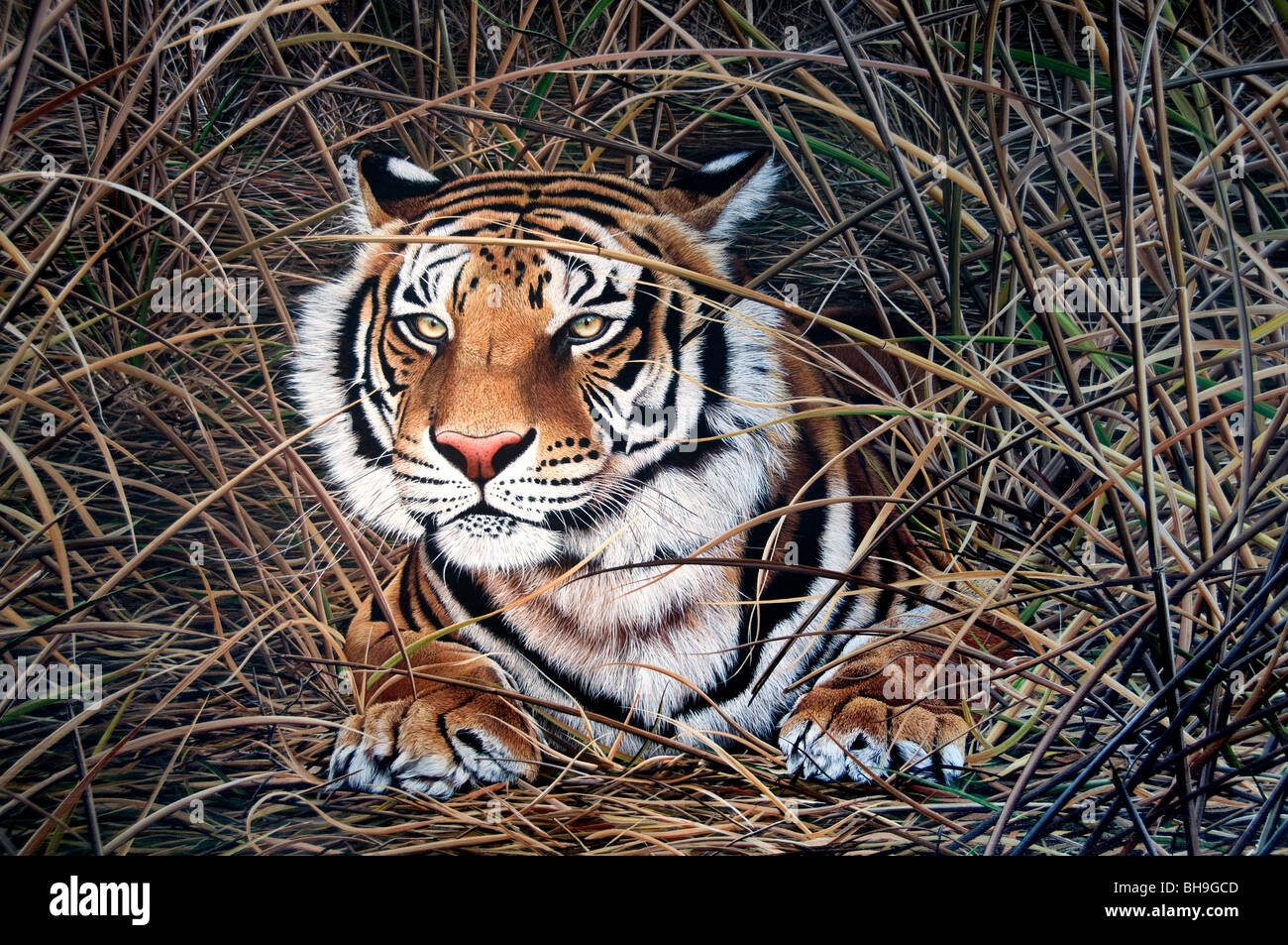 Tiger Buenos Aires San Telmo Gallery Art Painting Artist Argentina Town City - Stock Image