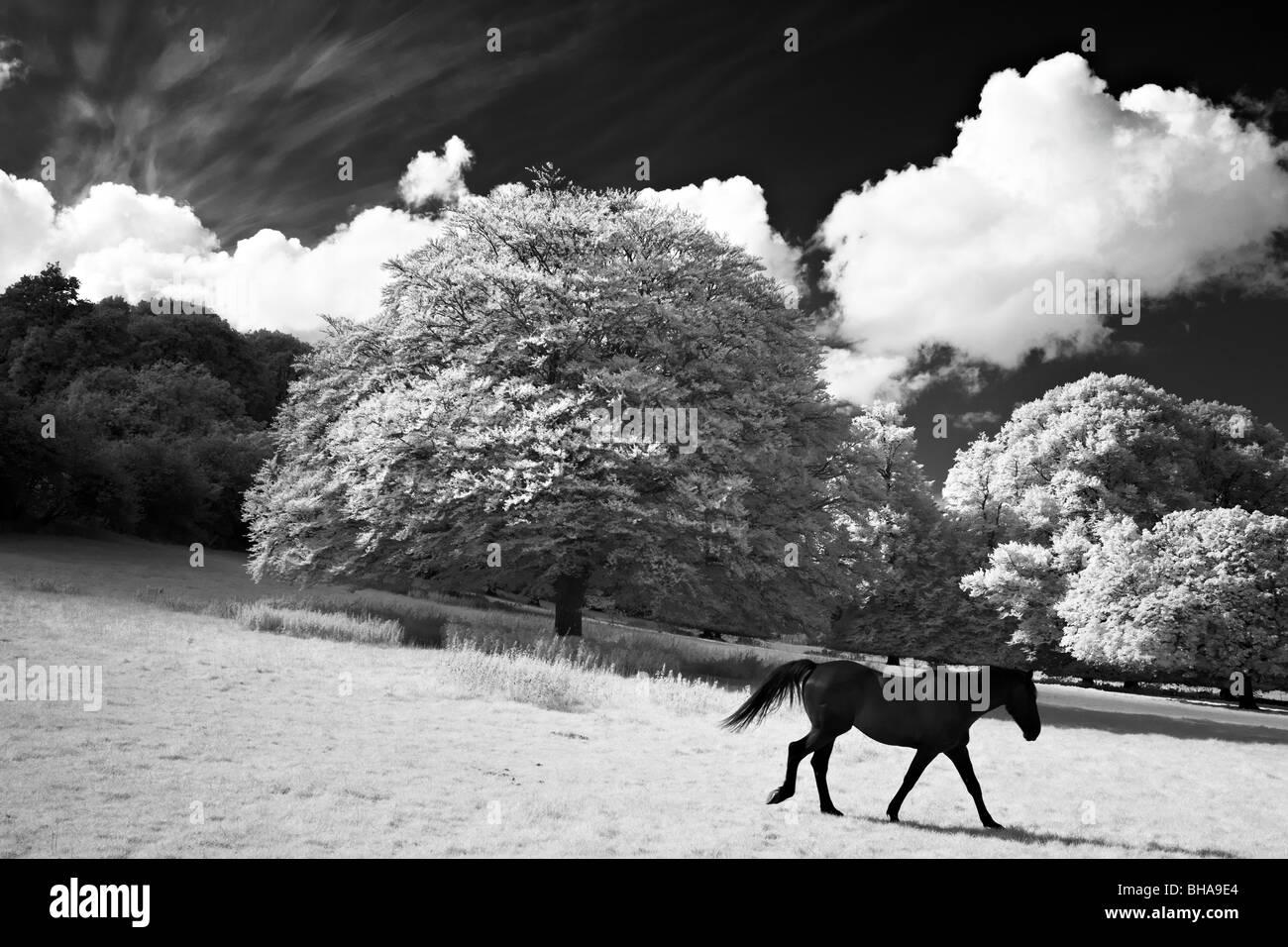 horses at Minterne Magna, Dorset, England, UK - Stock Image