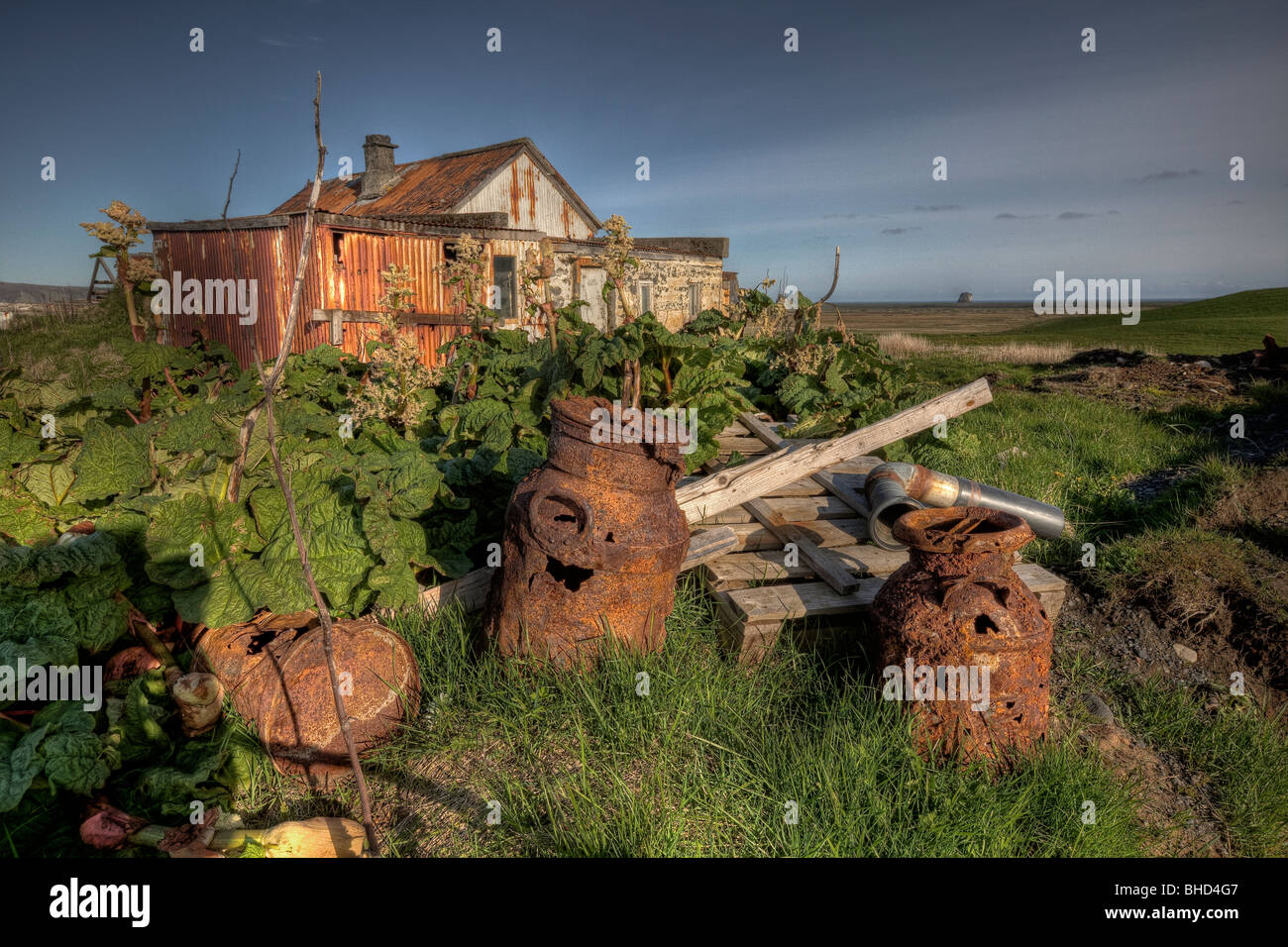 Wild rhubarb growing by old farm equipment , Iceland - Stock Image