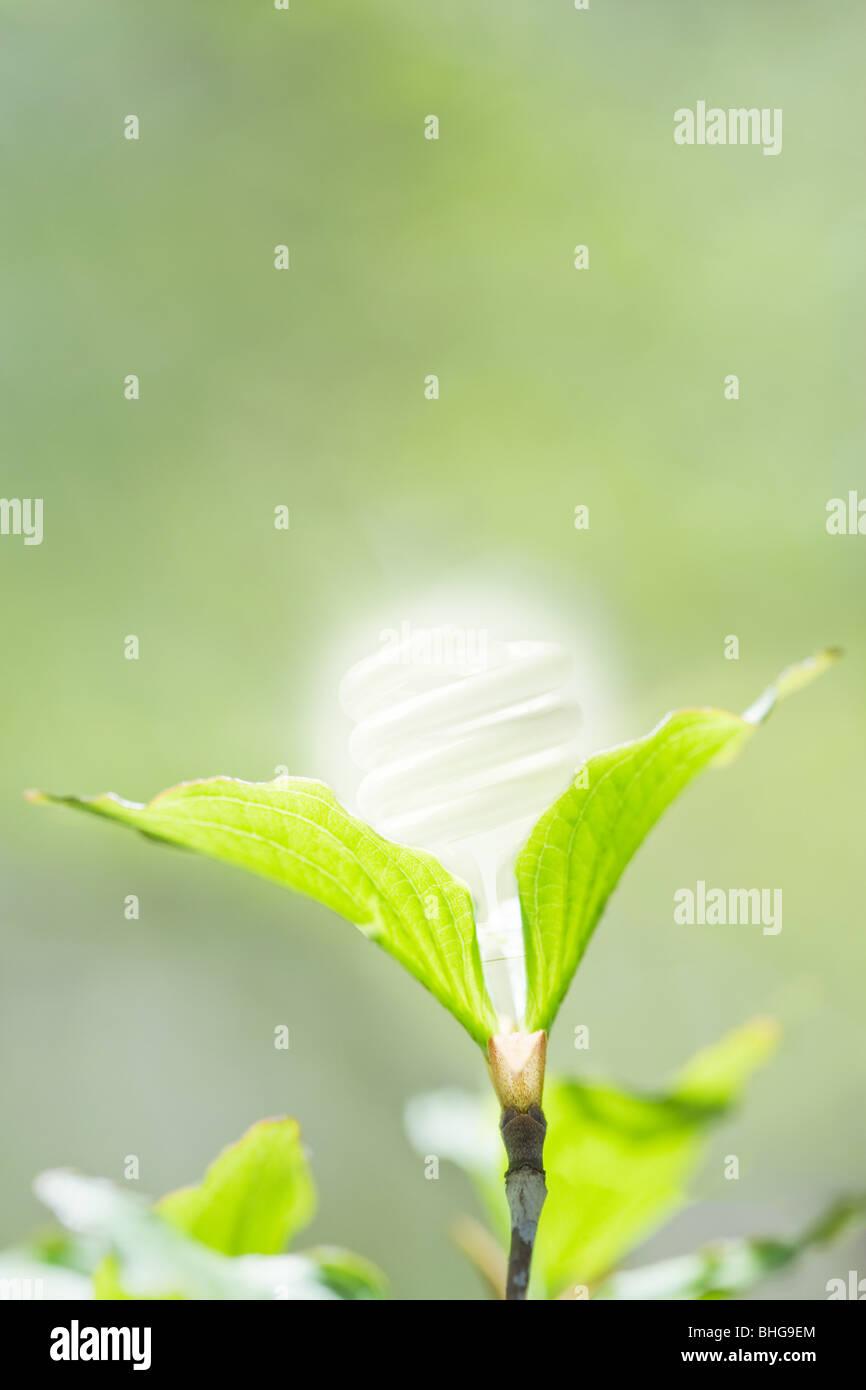Energy saving lightbulb in a plant - Stock Image