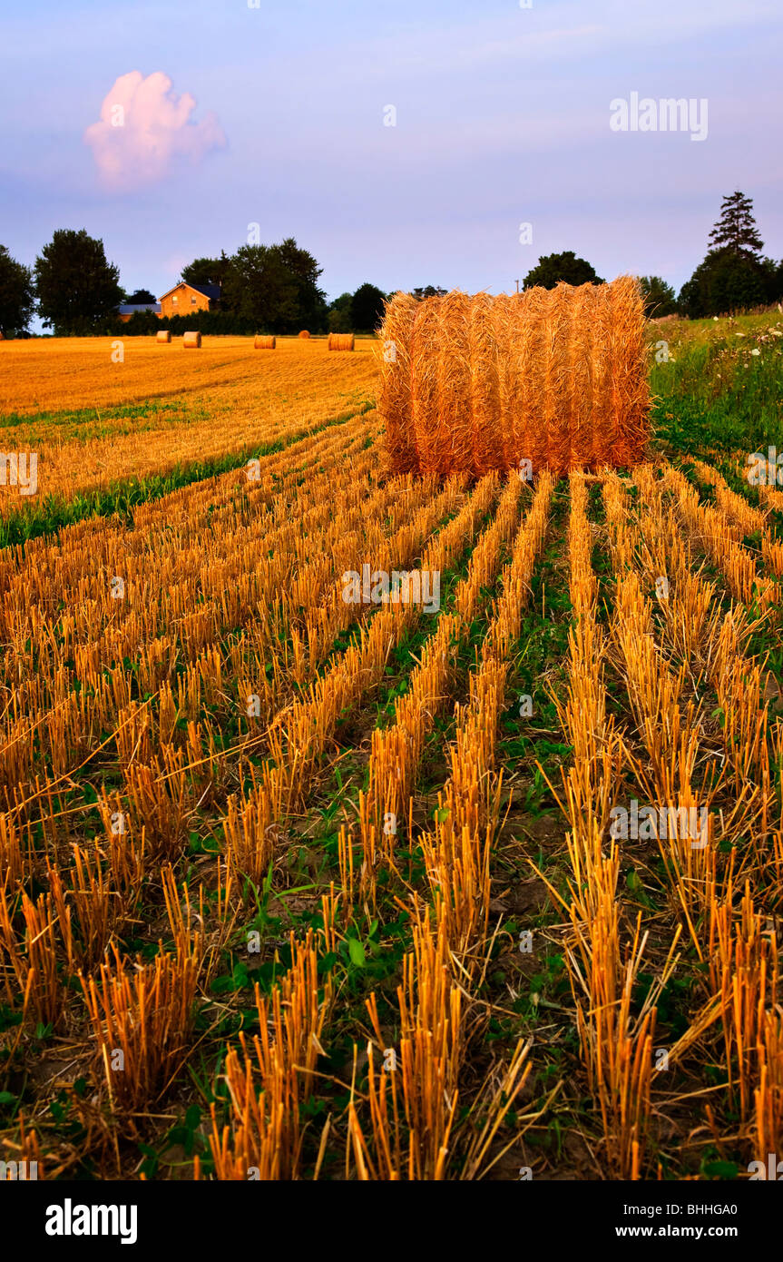 Farm field with hay bales at dusk - Stock Image