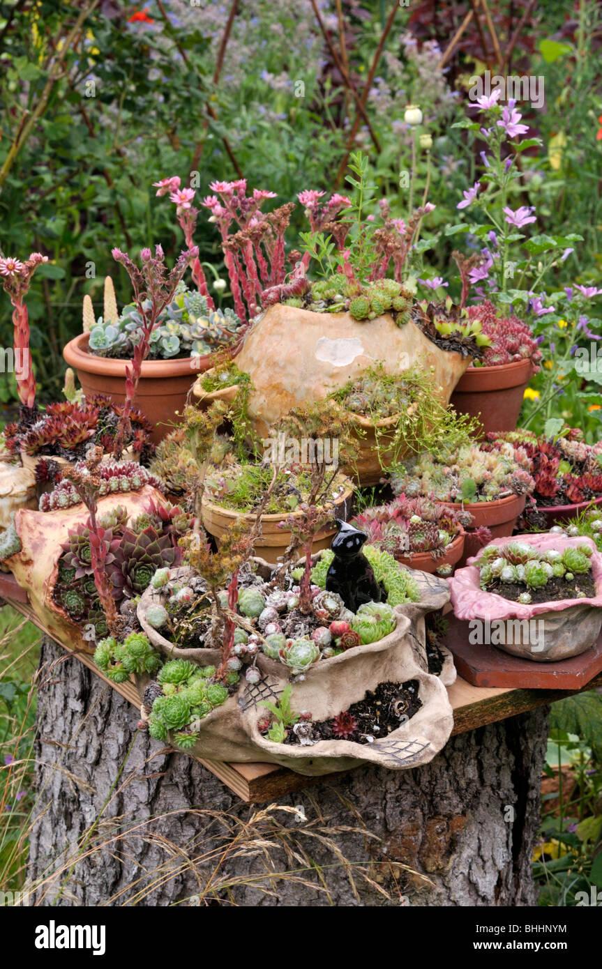 Container garden with succulents. Design: Susanna Komischke Stock ...