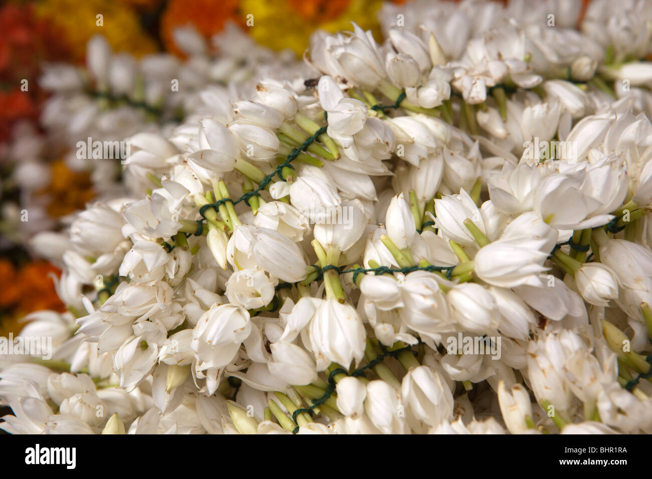 Jasmine flowers stock photos jasmine flowers stock images alamy india kerala munnar jasmine flowers tied together into fragrant floral garland stock izmirmasajfo Gallery