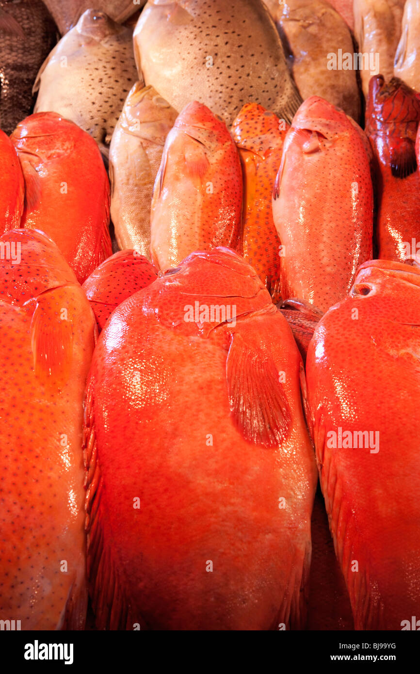 Fish for sale fish market; Manila; Philippines - Stock Image
