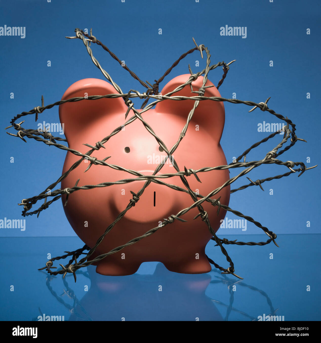 Piggy bank surrounded by barbed wire. - Stock Image