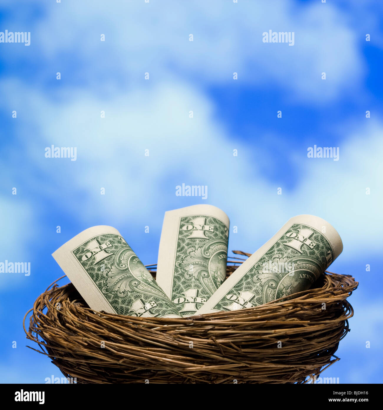 dollars in a nest - Stock Image
