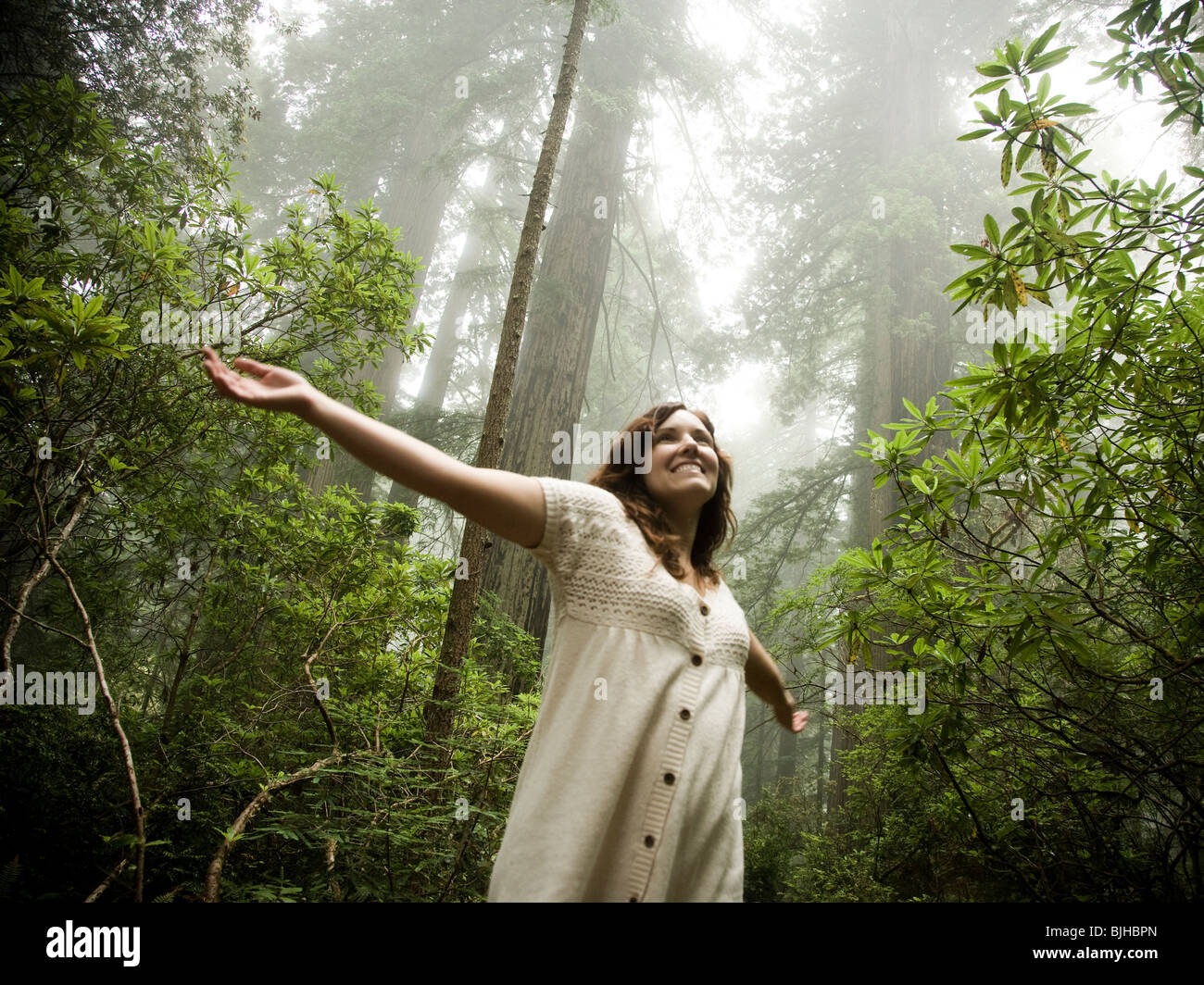 woman walking through a forest of giant redwoods - Stock Image
