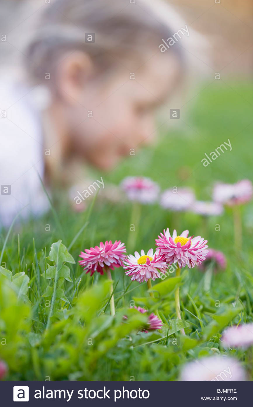 Daisies in grass, child in background - Stock Image