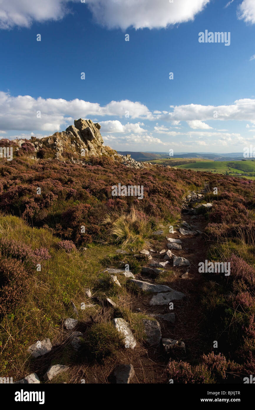 Stiperstones purple heather summer day blue sky sunshine near Bishops Castle Shropshire Borders England Great Britain - Stock Image