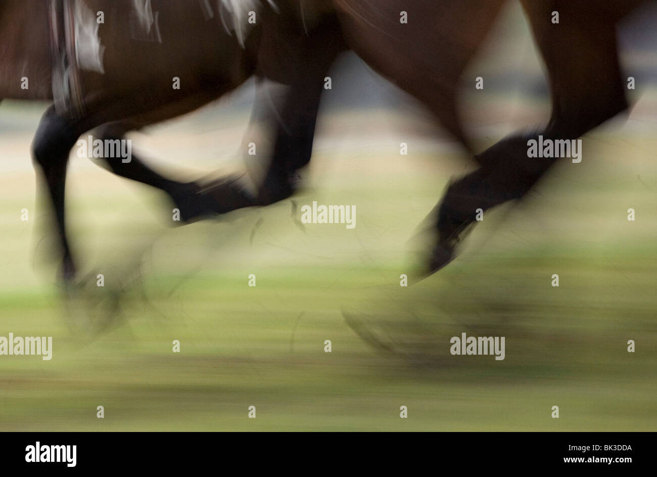 Horses hooves in a race - Stock Image