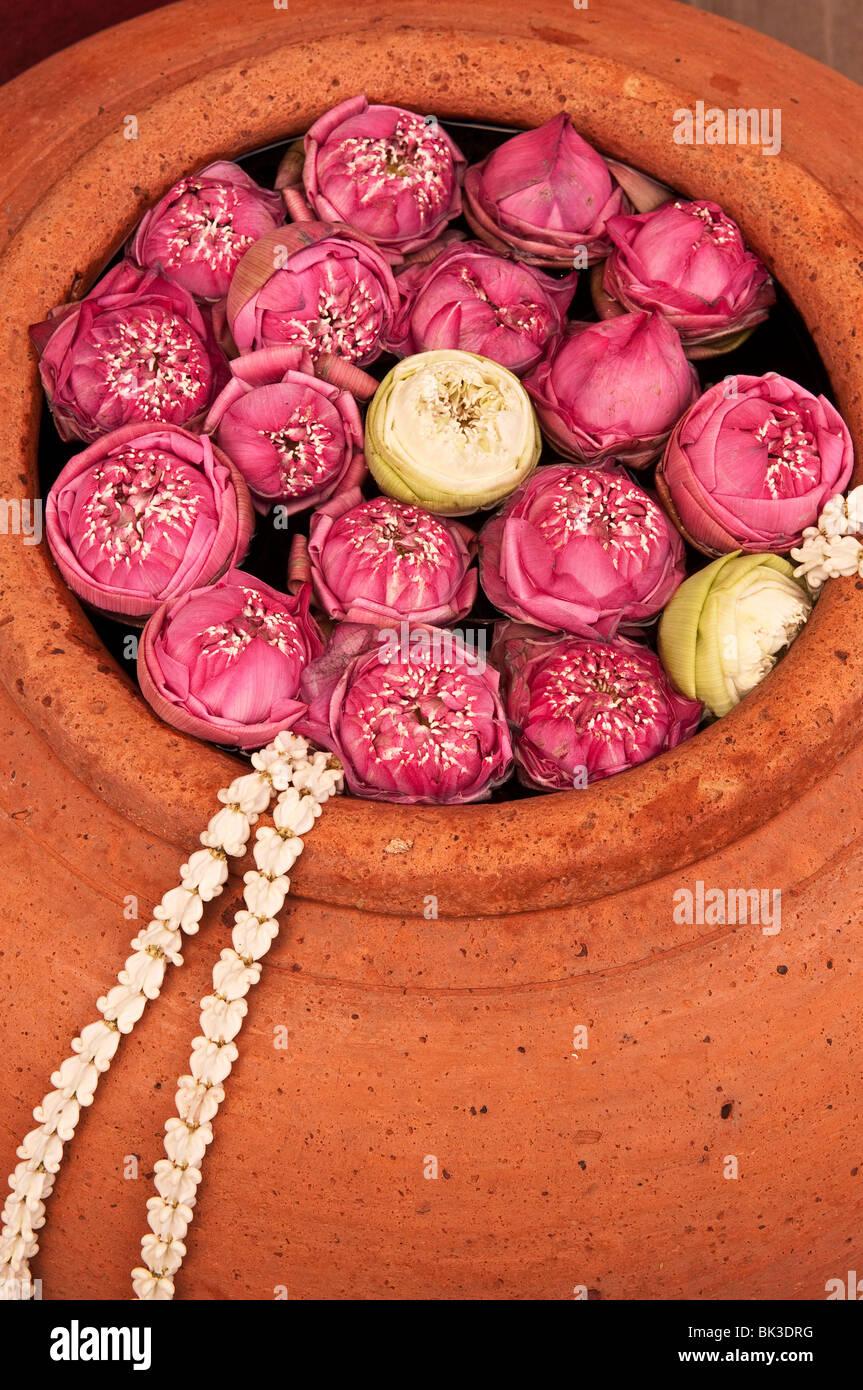 Lotus blossoms in terracotta pot at Siam Niramit; Bangkok, Thailand. - Stock Image