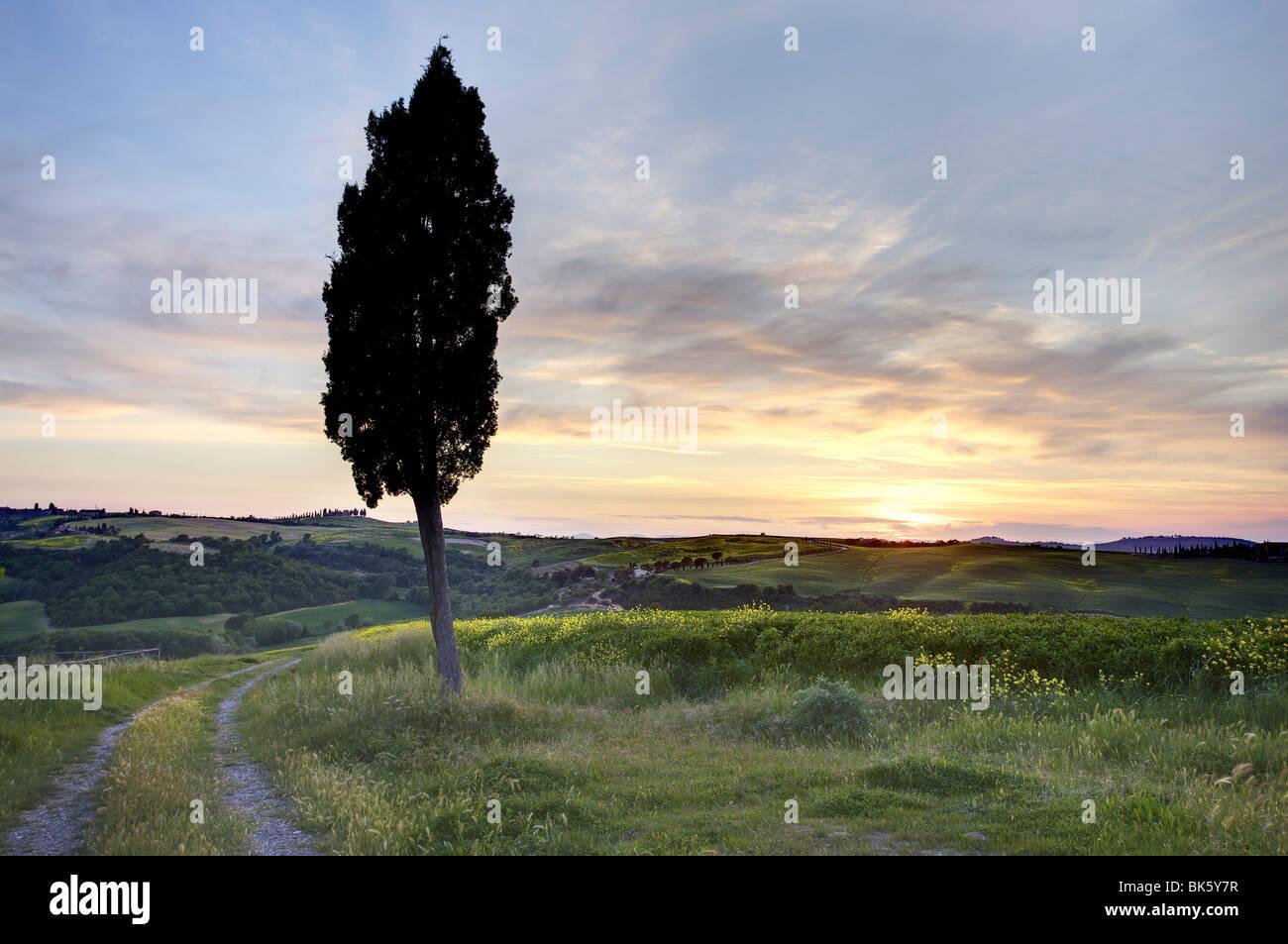 Lone cypress tree at sunset, near Pienza, Tuscany, Italy, Europe - Stock Image