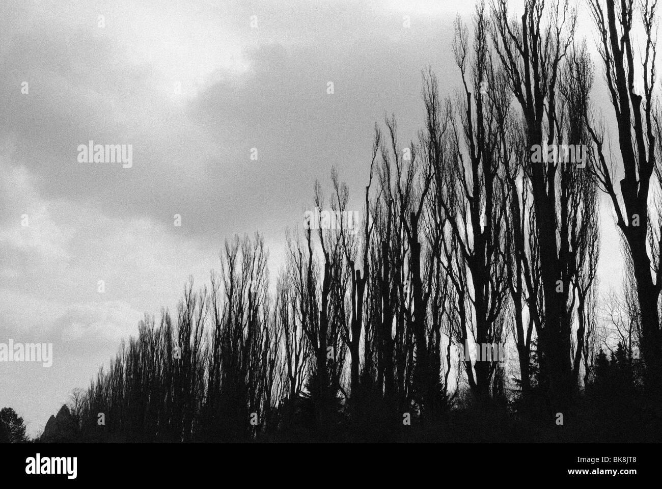 ROW OF TREES AND GRUNDTVIGSKIRKEN - Stock Image