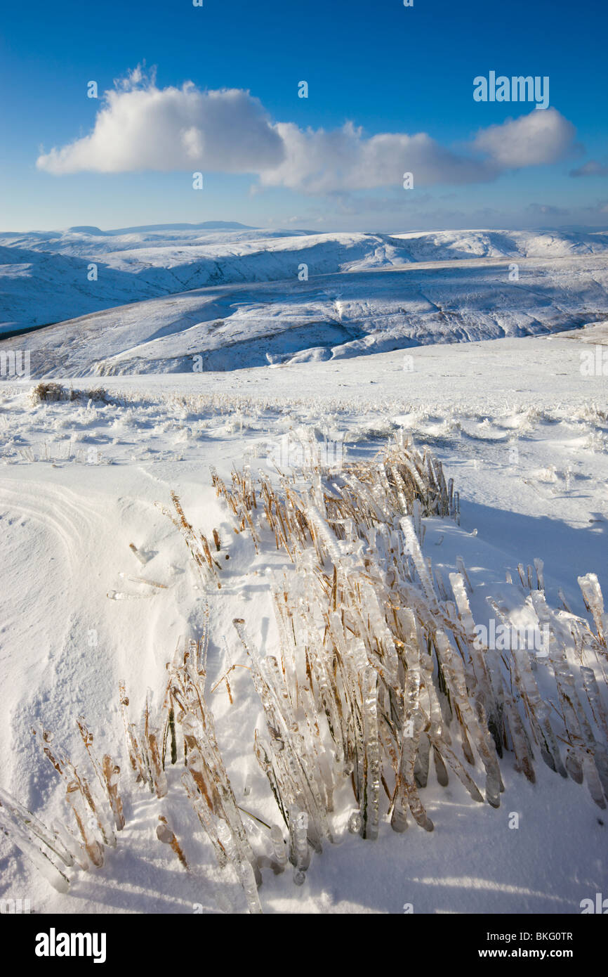 Frozen grass on the snow covered slopes of Corn Du mountain in the Brecon Beacons National Park, Powys, Wales, UK. - Stock Image