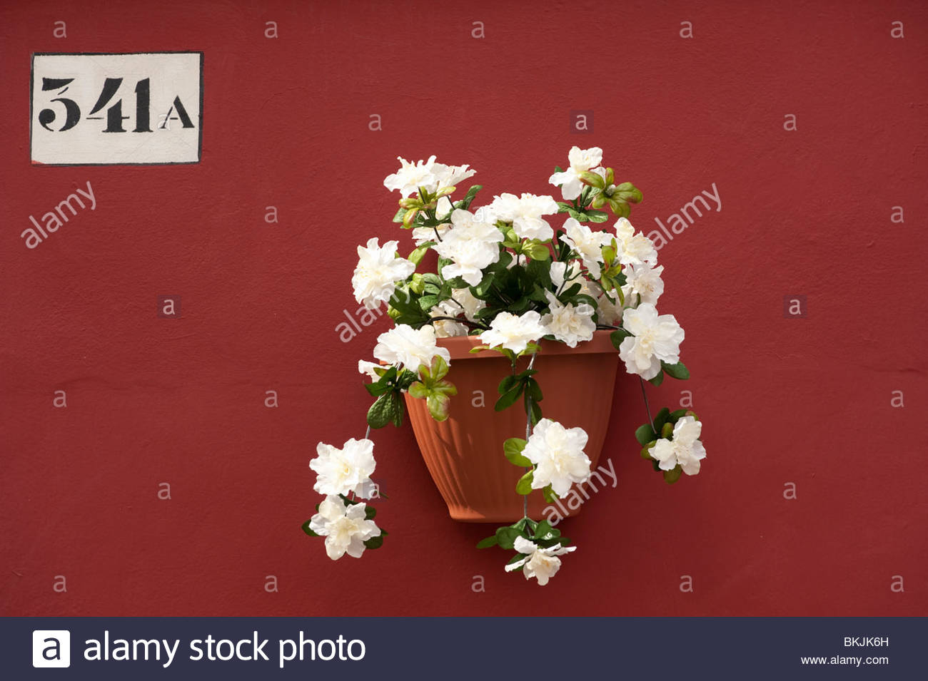 Flower pot on wall of colourful house in village of Burano near Venice in Italy - Stock Image