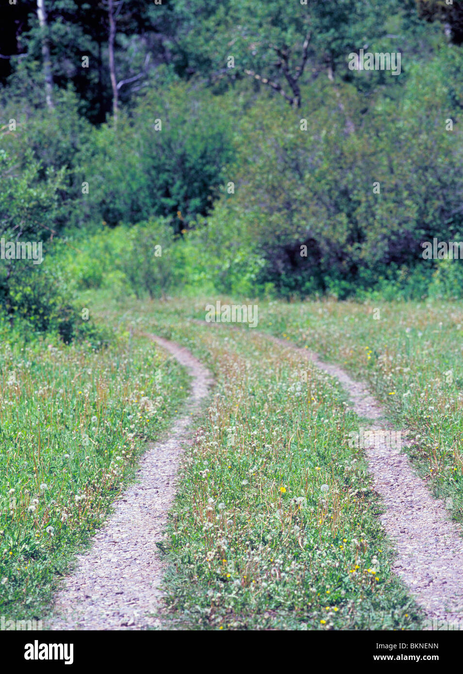 two lane rutted gravel road cutting through green grass park county