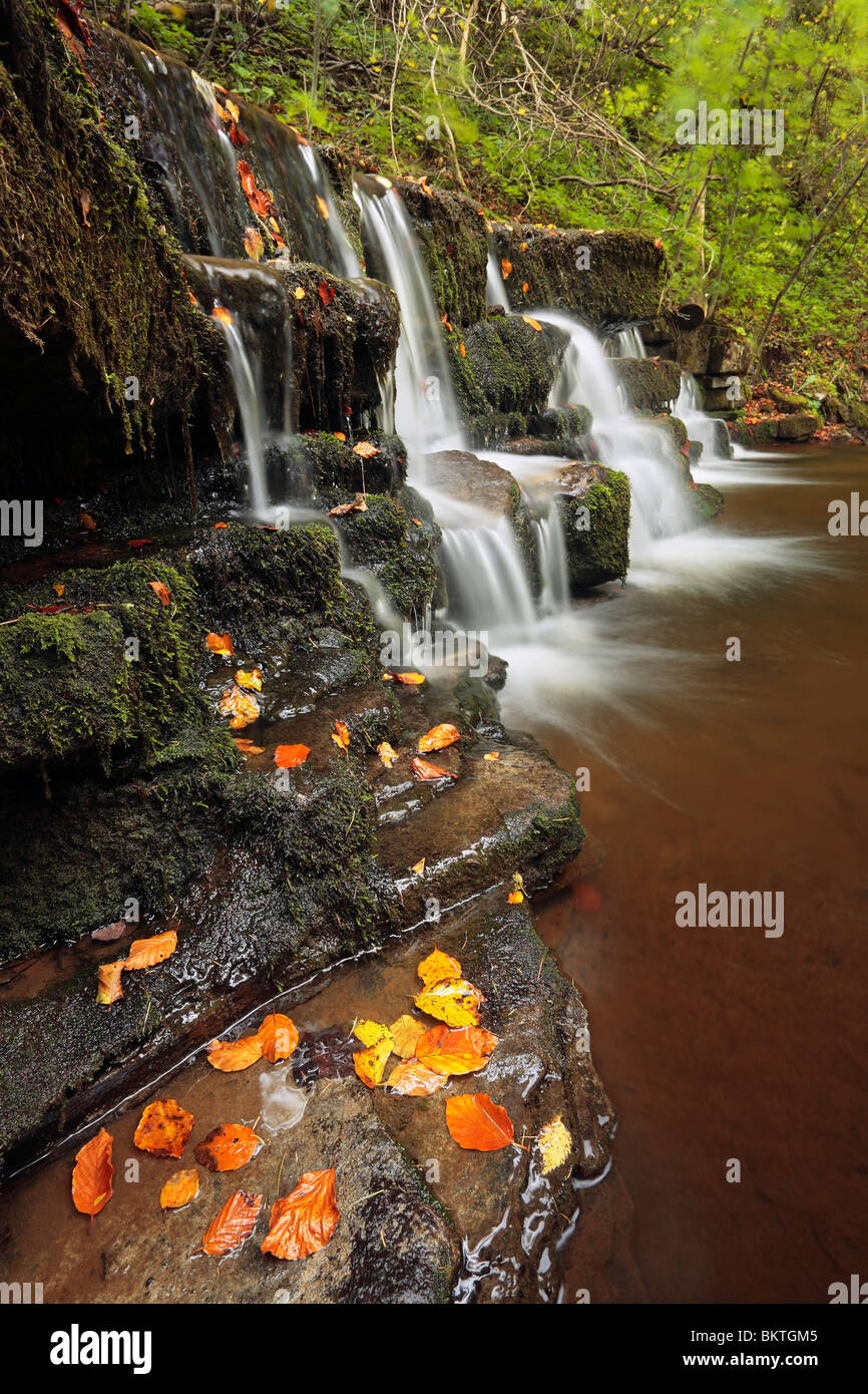 Autumn color at Scaleber Force near Settle in the Yorkshire Dales of England - Stock Image