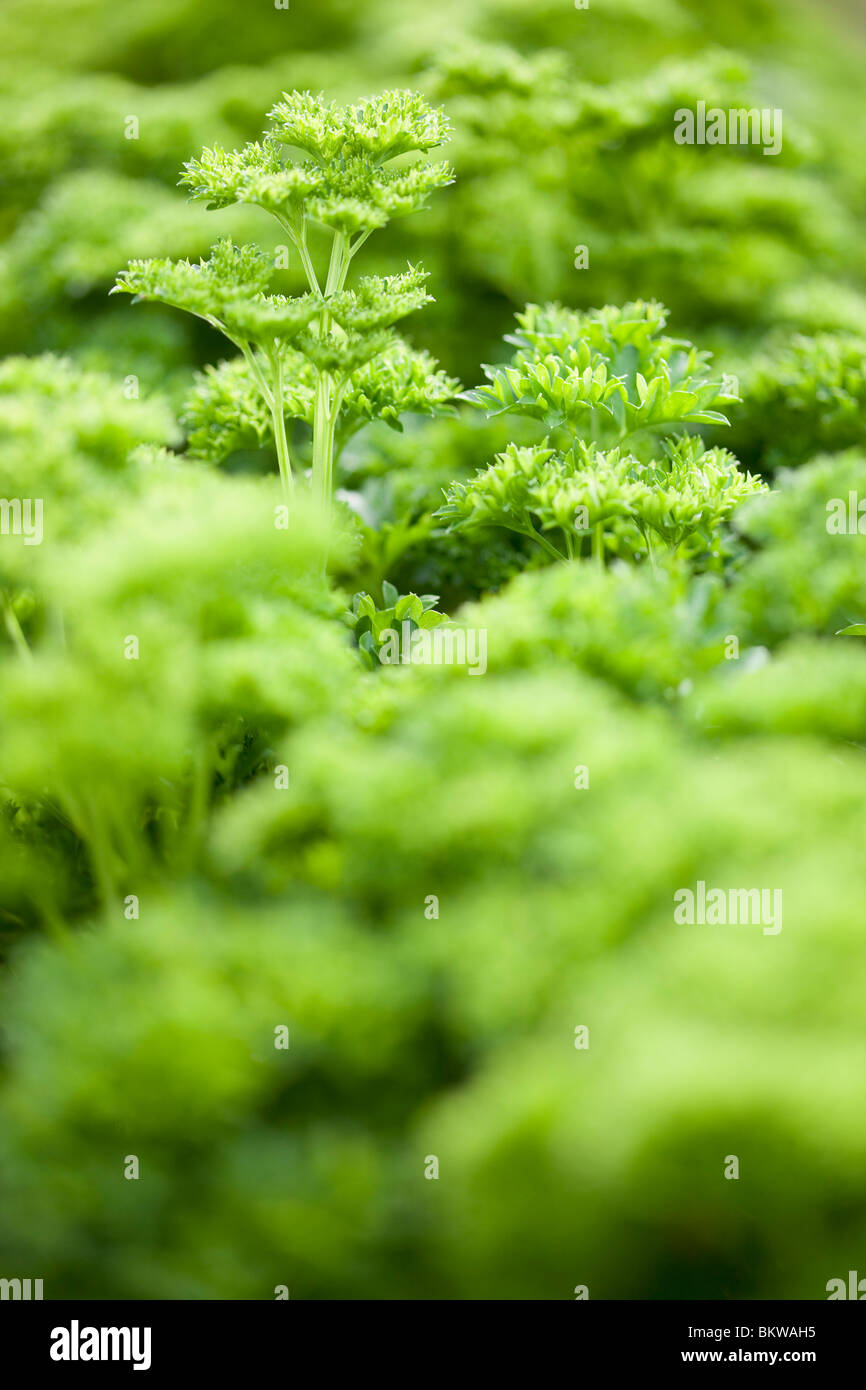 Green ocean of vegetation - Stock Image