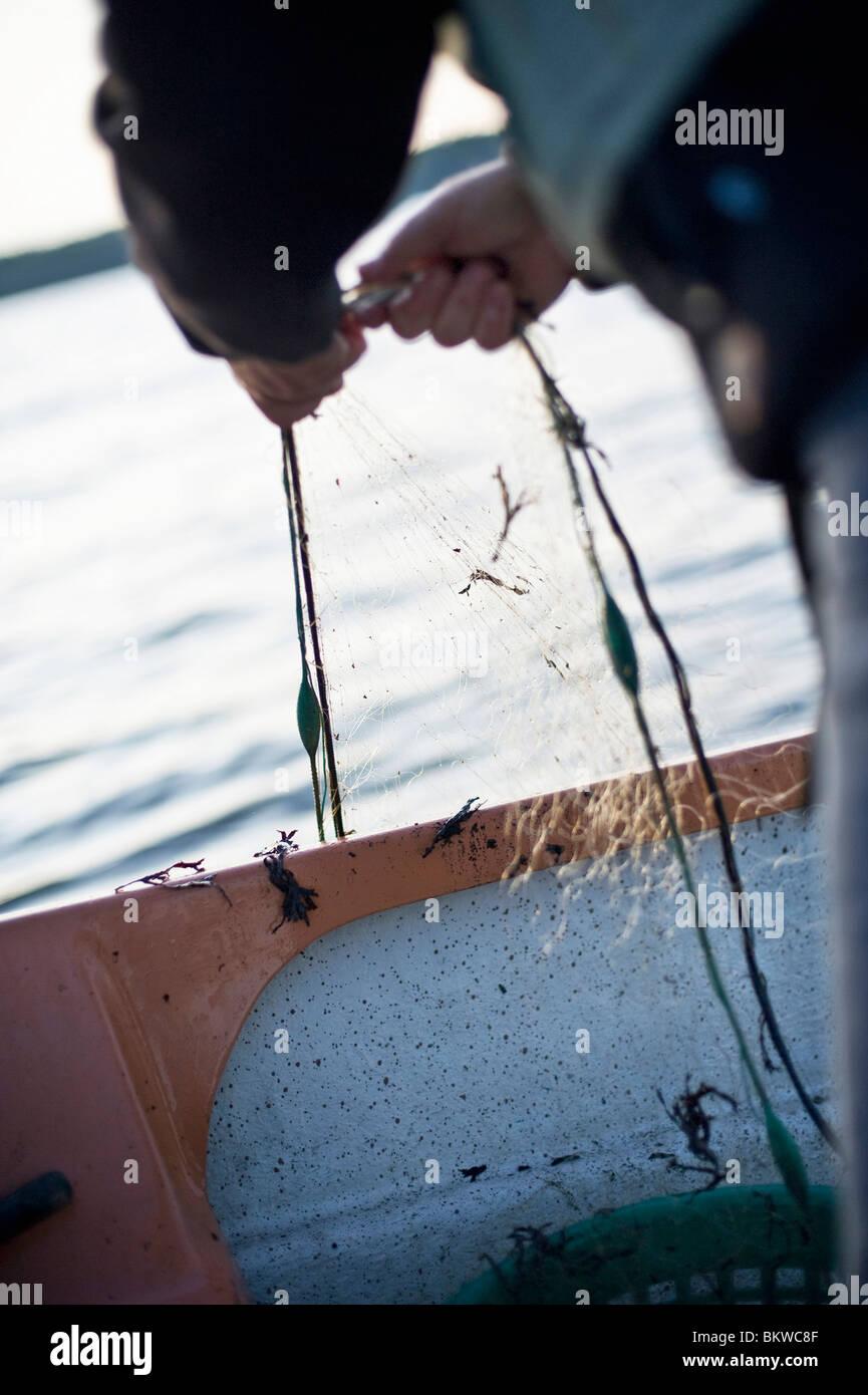 Man standing by rail bringing up fishing net - Stock Image