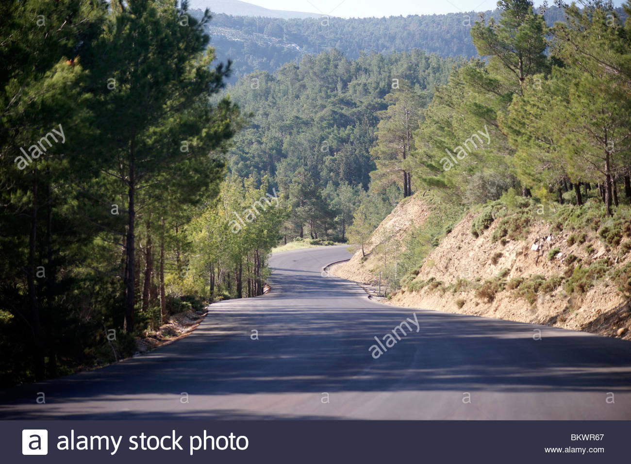 Greek road through the forest paid for by the EEC - Greece - Stock Image