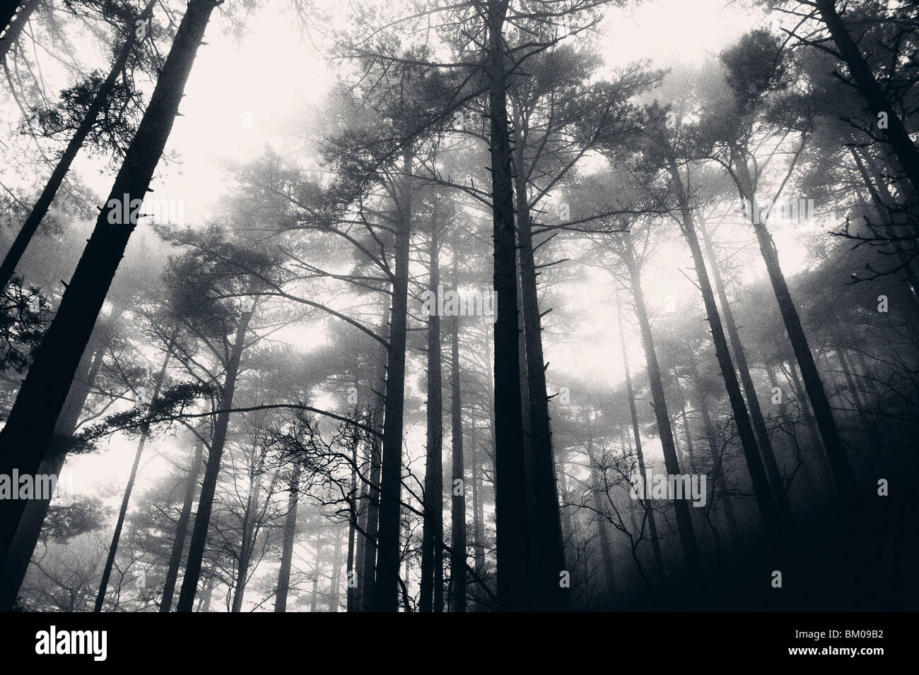 In the fog and the rain in the Yellow Mountains of Huangshan, China Stock Photo