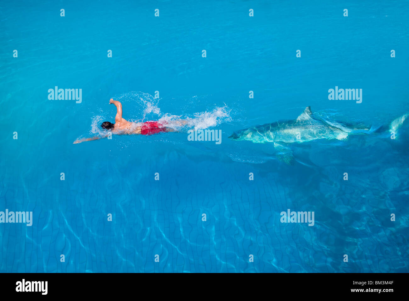Being haunted by a shark - Stock Image