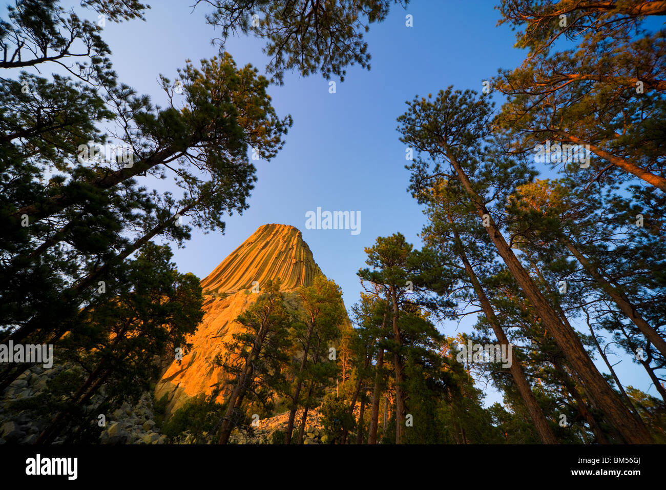 Devils, Devil's Tower National Monument, Wyoming, USA at sunset. A volcanic rock that is sacred to native American Stock Photo