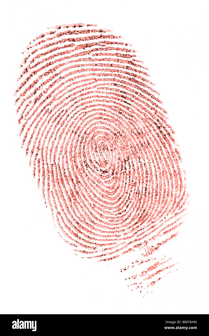 closeup of a fingerprint in red ink on white Stock Photo