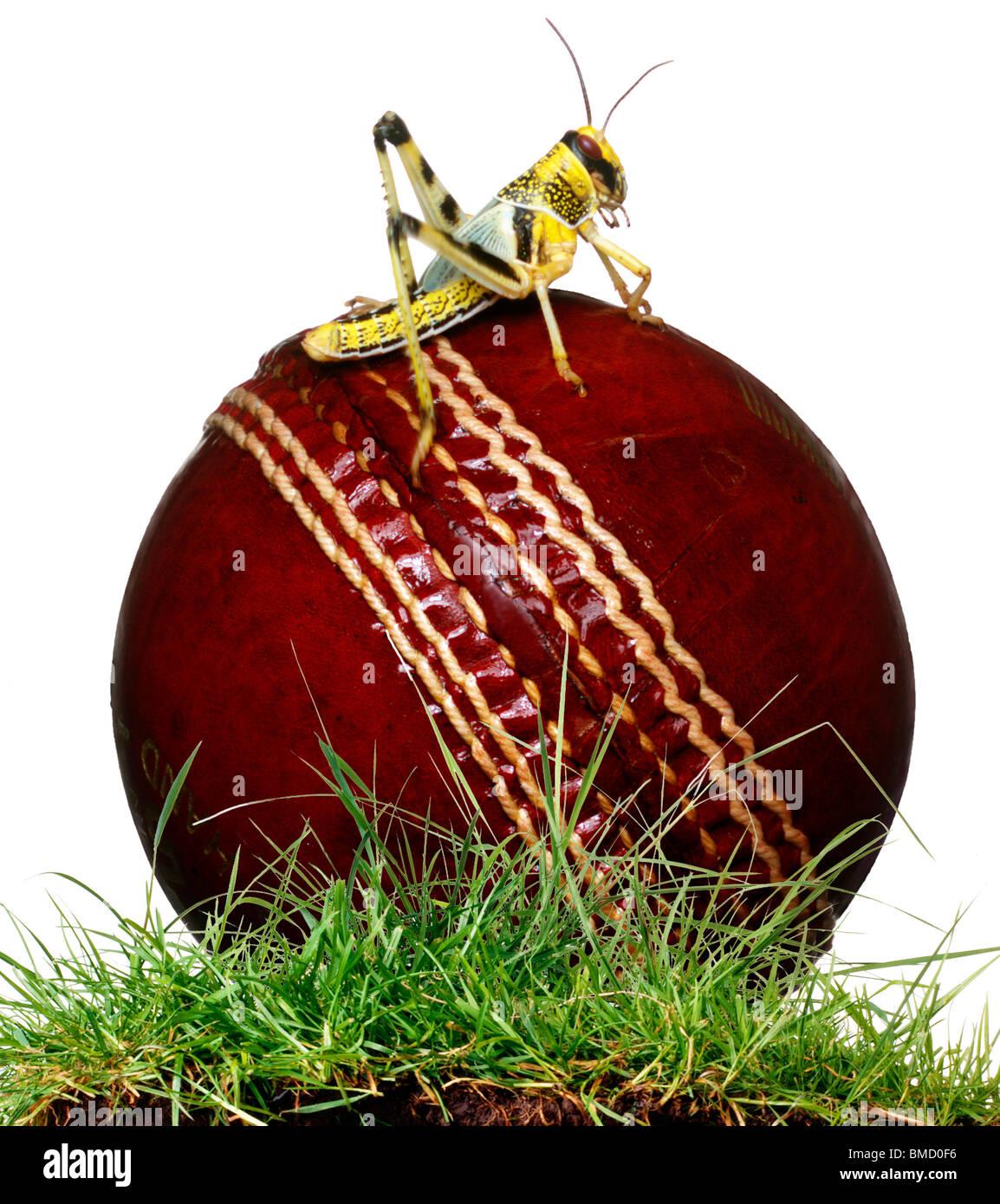 Cricket Ball - Stock Image