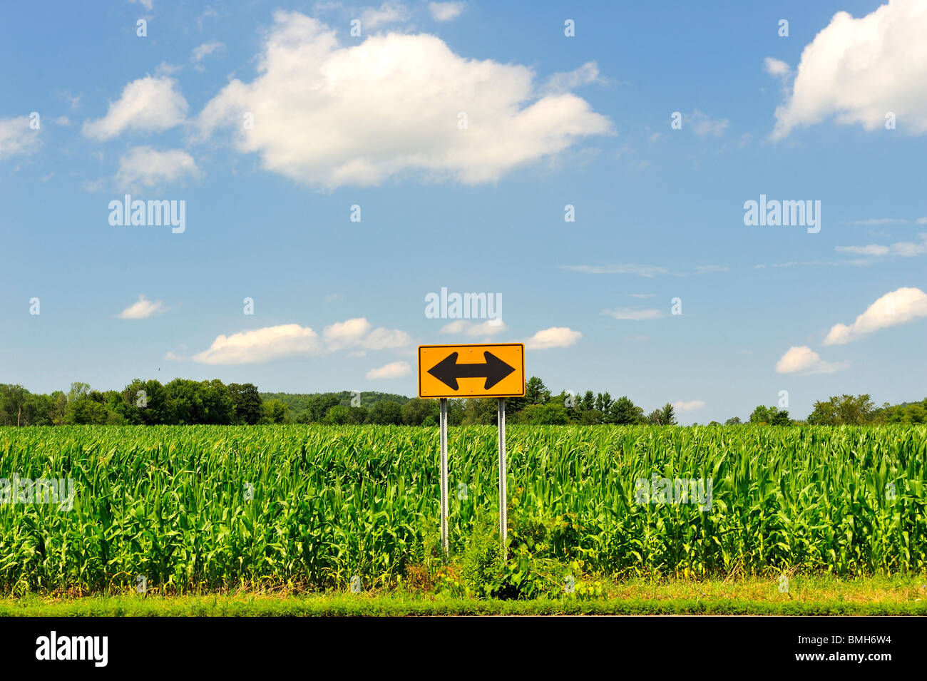 which-way-should-i-go-quirky-two-way-arrow-sign-in-cornfield-blue-BMH6W4.jpg