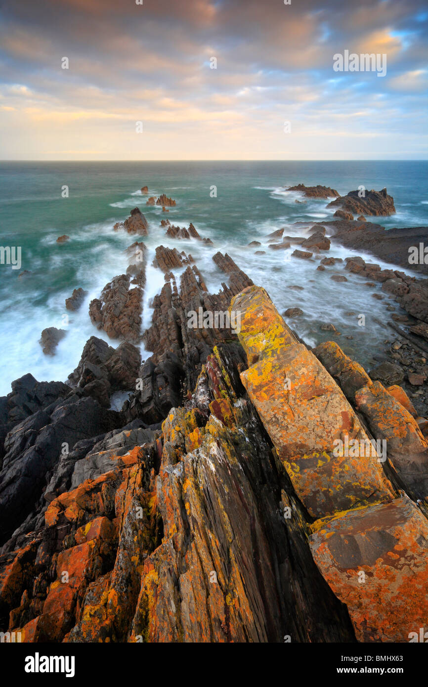Morning light on the jagged, lichen-covered rock formations of Hartland Quay in Devonshire, England - Stock Image