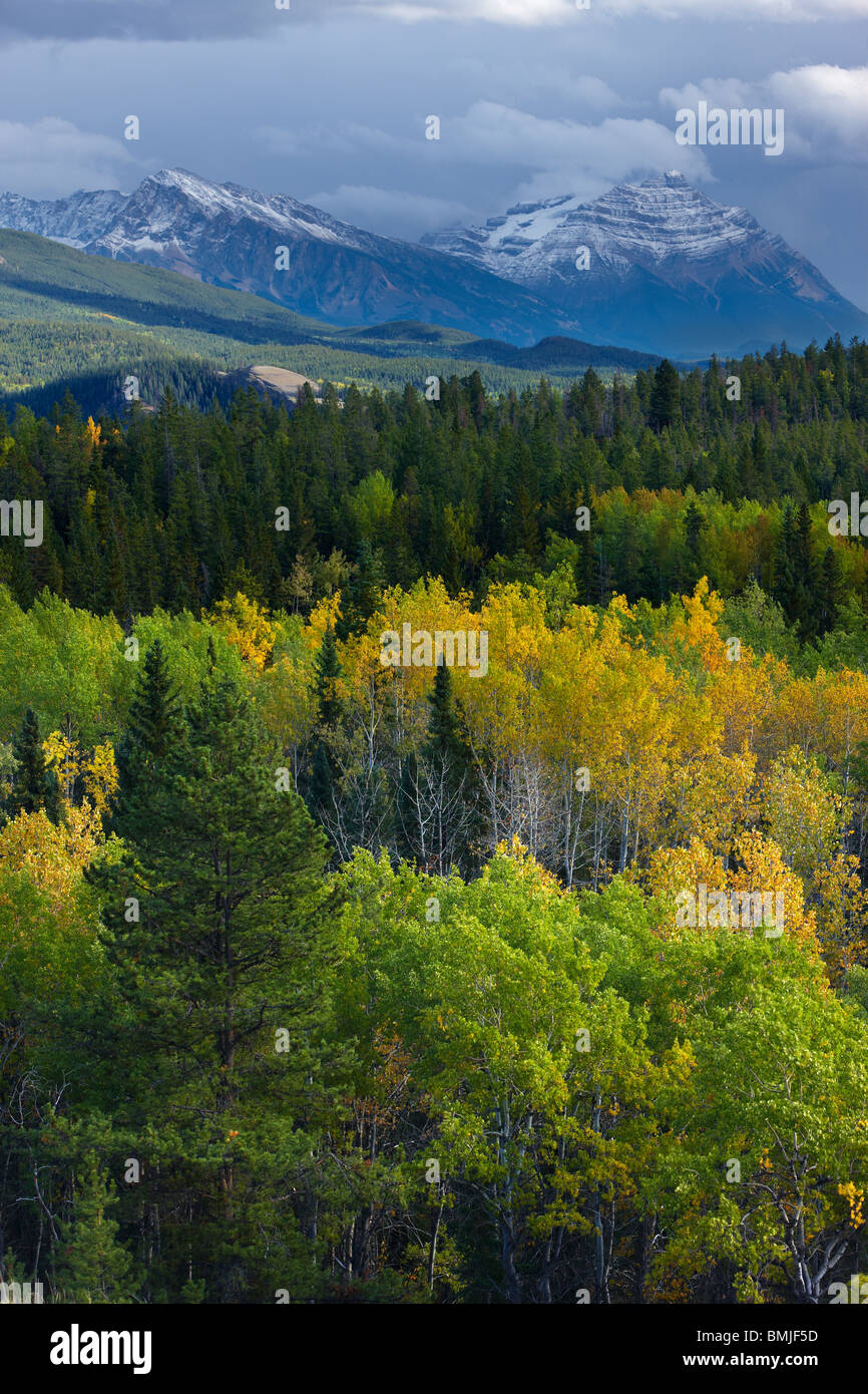 autumn colours nr Patricia Lake, Jasper National Park, Alberta, Canada - Stock Image