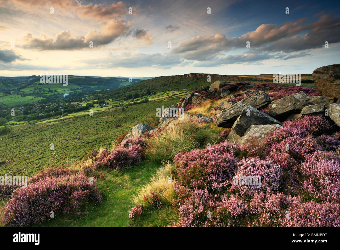 Late summer light on the heather-clad Curbar Edge in the Peak District of Derbyshire, England - Stock Image