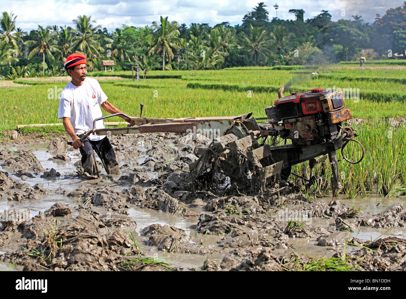 a-farmer-ploughing-a-flooded-rice-paddy-near-ubud-bali-indonesia-BN1DDH.jpg
