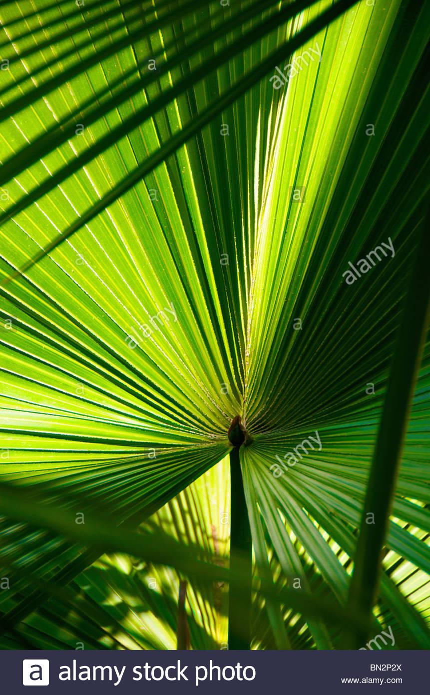 Palm detail Eilat Israel - Stock Image