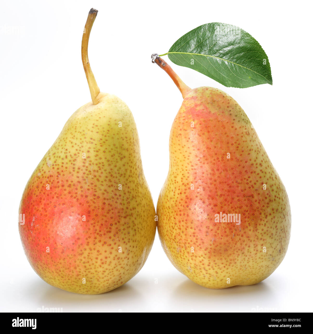 Two appetizing pears with a leaf. Isolated on a white background. - Stock Image
