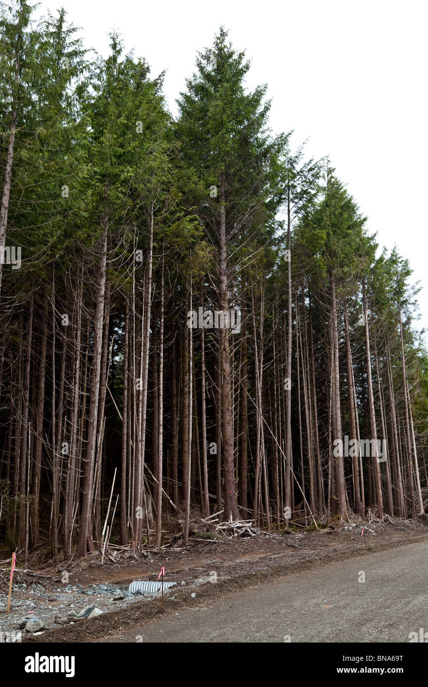 Forest,clearcut, concept of environmental damage - Stock Image