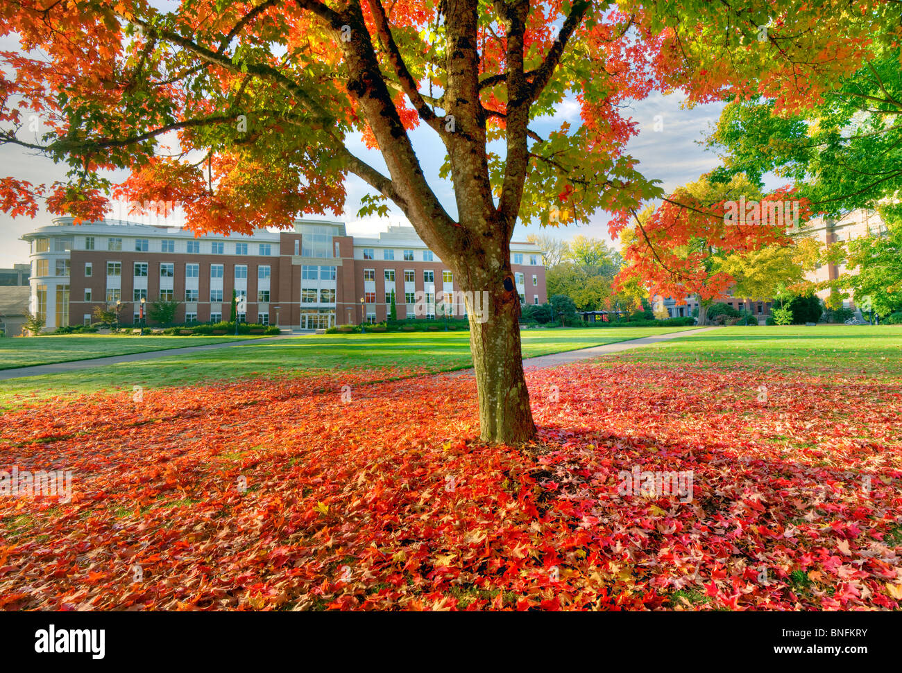 The valley Library and quad with fall color. Oregon State University. - Stock Image