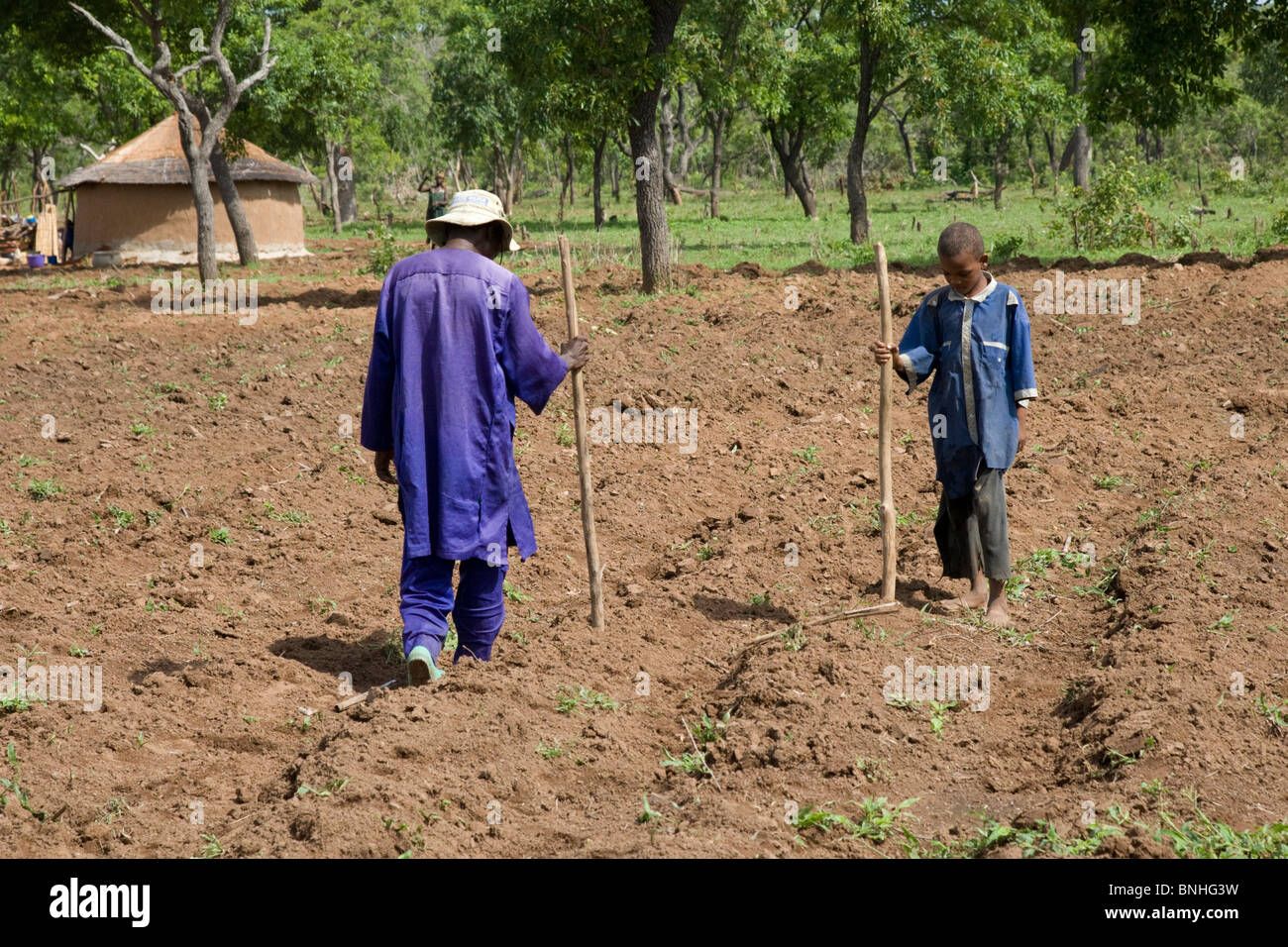 Sowing the maize crop in Ghana. They are making holes in the ridges of soil in which other children will sow maize - Stock Image