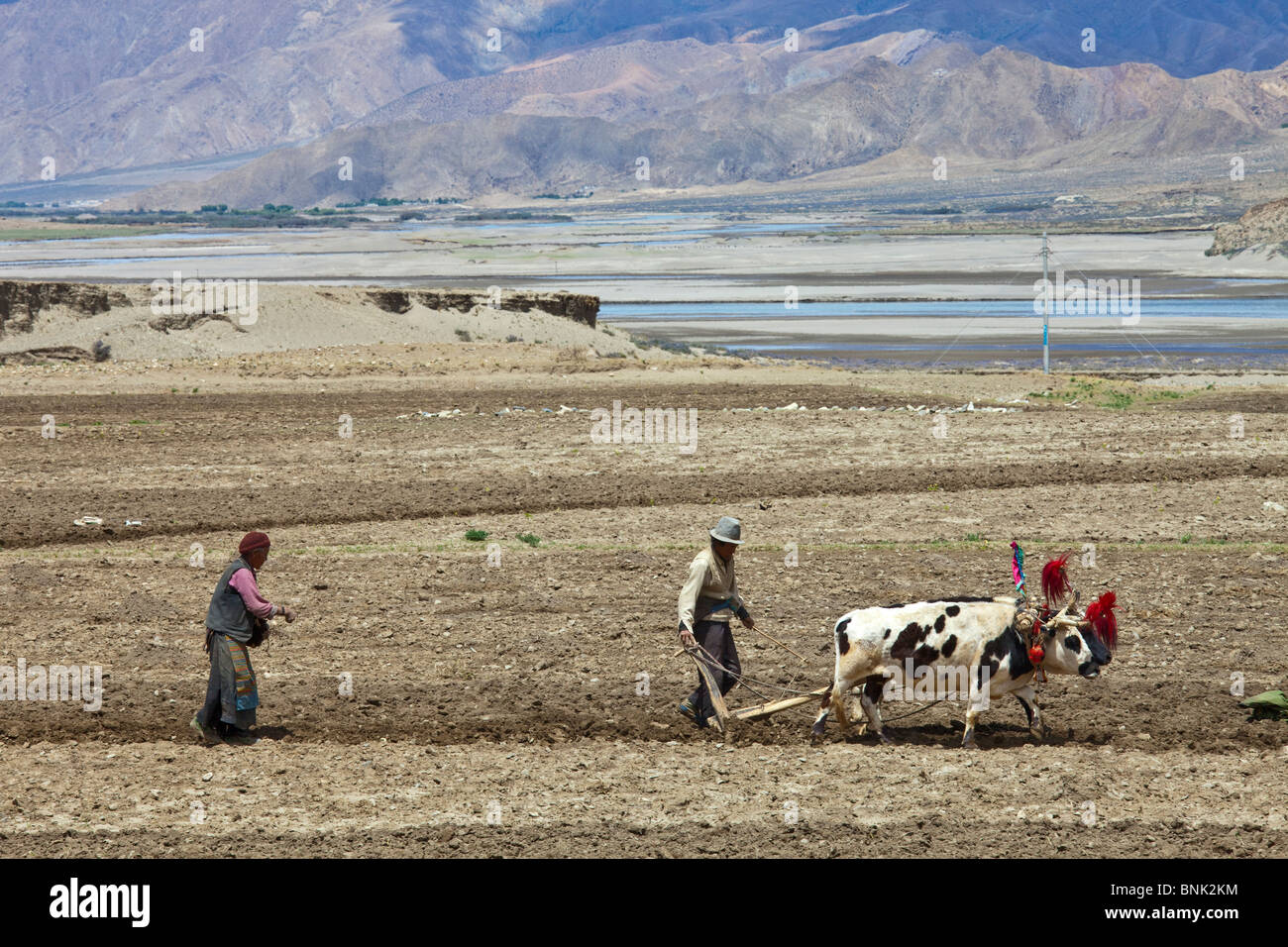Farmers plowing and planting in rural Tibet - Stock Image