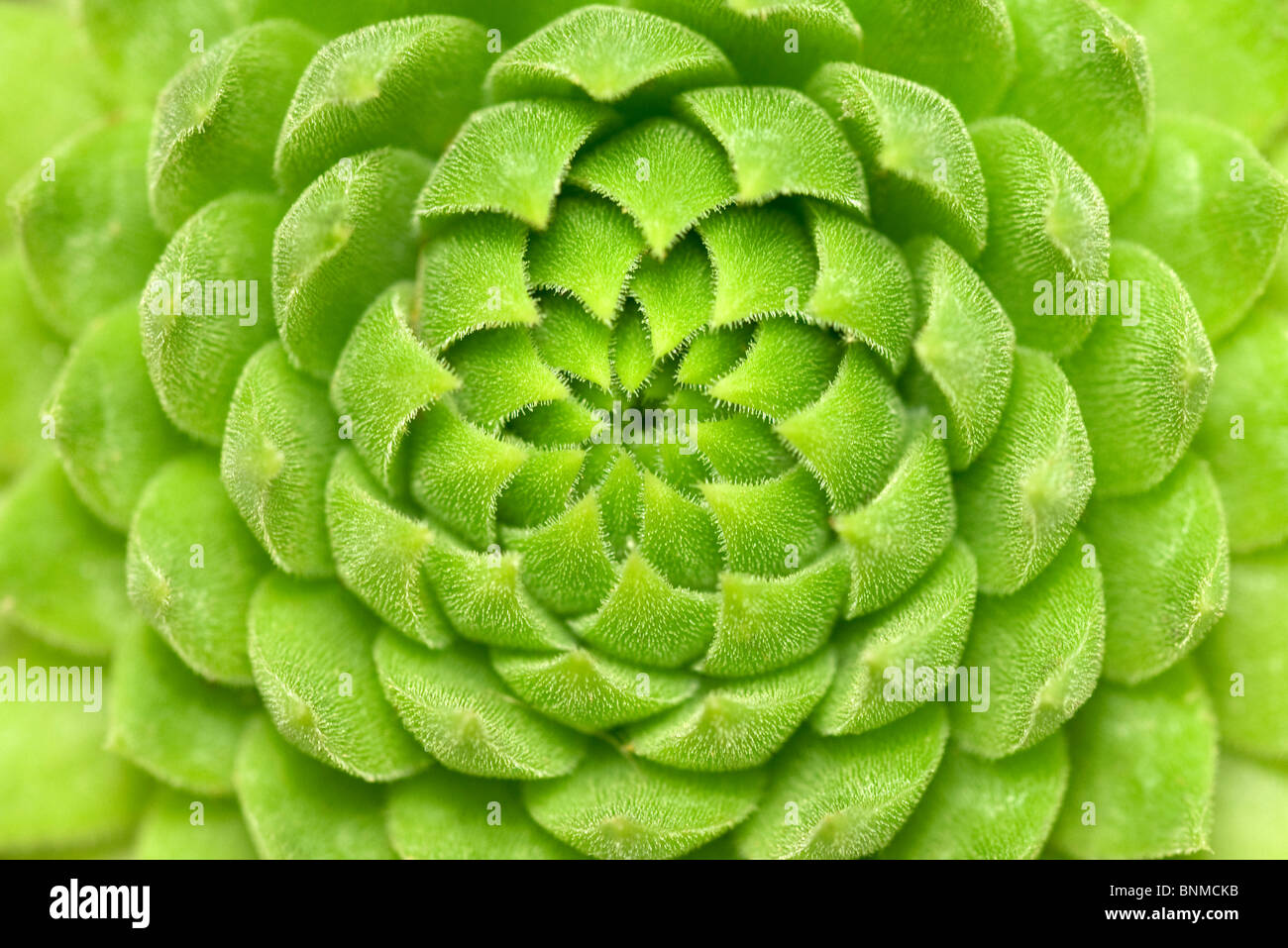 close up of green succulent plant - Stock Image