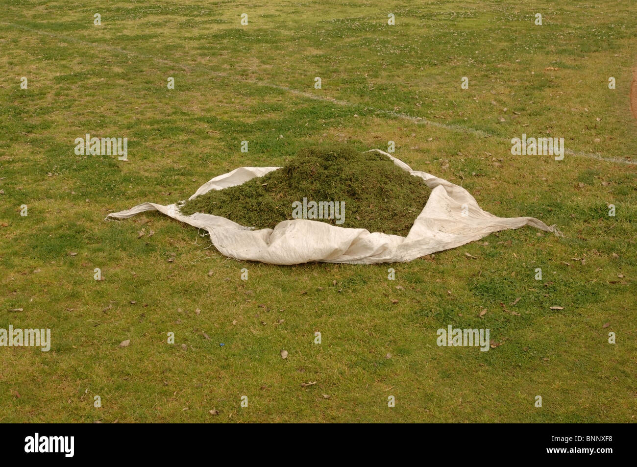 Freshly cut grass clippings on a tarp. - Stock Image