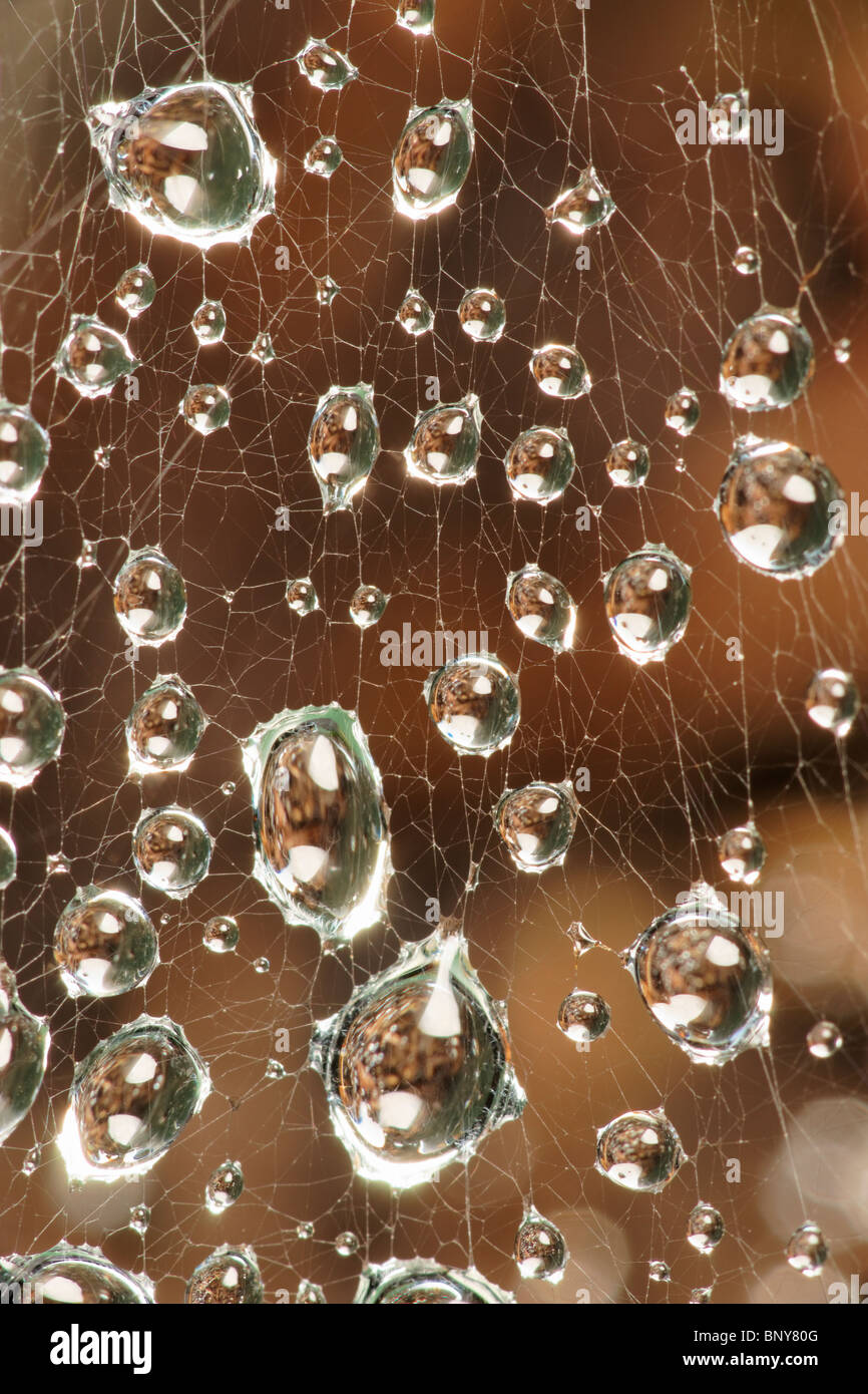 Water droplets on spiders web. - Stock Image