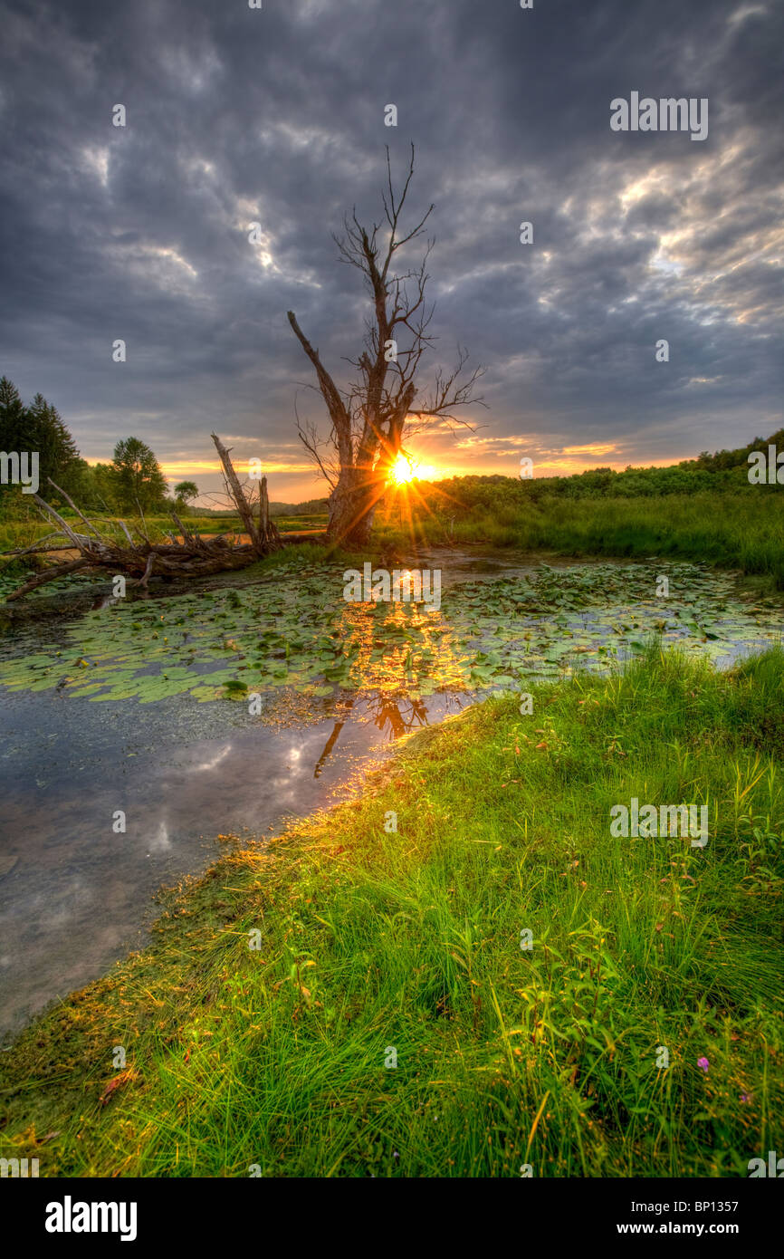 A spooky swamp in Montgomery County, central New York State. - Stock Image