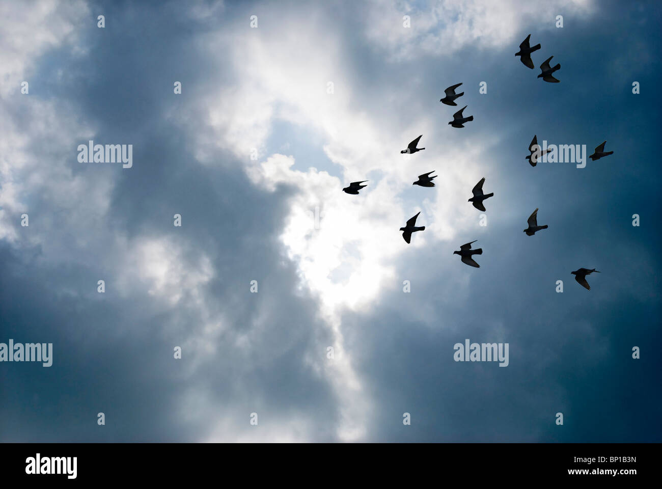 Birds flying breakthrough gray clouds Concept of fly overcome. - Stock Image